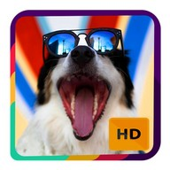 Cute Dog Wallpapers HD