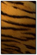 Tiger Leather
