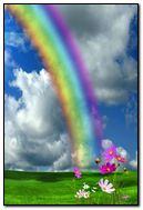 Rainbow Flowers