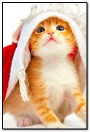 Kitten holiday