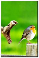 Snake Eat Bird Hd