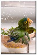 Funny-Parrot