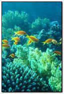 Under Water Fish