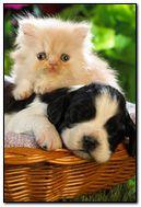 KITTY & DOG