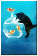Cute kitten and fish