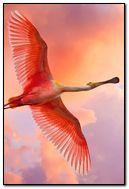 pink bird flying-wallpaper-1920x1080