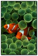 iPhone fishes