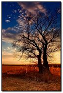 Tree Silhoutte