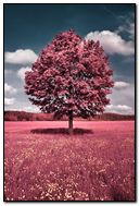 Tree Pink
