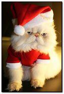 funny christmas cute cat