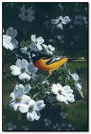 Spring Bird By Terry Isaac