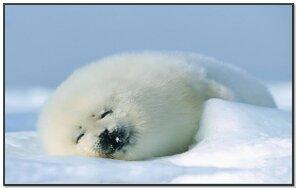 Polar Smurf