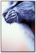 Cat Roar