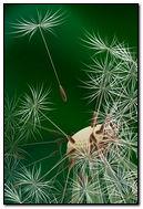 Half Dandelion Flower