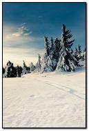 Nature Winter snow