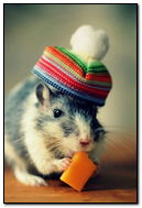 Mouse In Funny Little Hat Eating Cheese