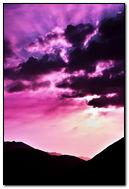 Early Purple Breeze