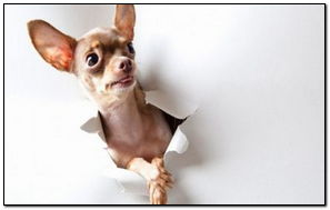 Dog Toy Terrier Surprise