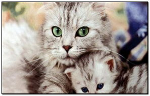 Animal Mom's Love 2