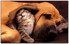 Dog And Cute Cat Friendship