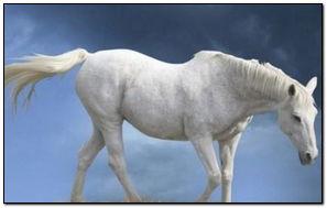 Altair Horse