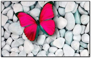 Borboletas rosa