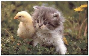 Cat 而鸭婴儿