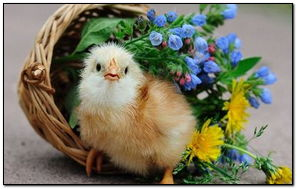 Bird Cute