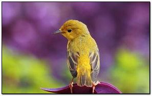 Желтая бликовая птица