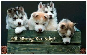 Still Missing You Baby!