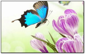 Butterflies Crocuses