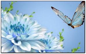 Blues On Blue Butterfly Dahlia