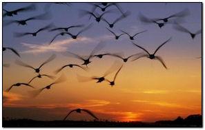 Sunset Many Birds