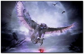 Fantasy Owl With Heart
