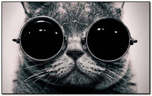 Funny Black Cat
