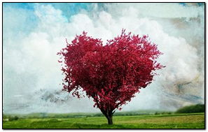 प्रेम झाड