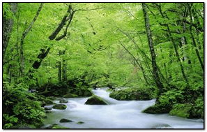 Hình nền thiên nhiên-7