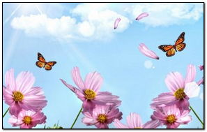 Meadow Butterflies