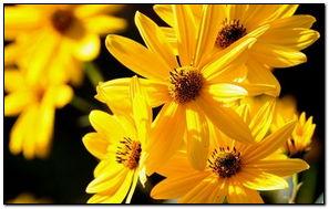 Желтые цветы Закрыть