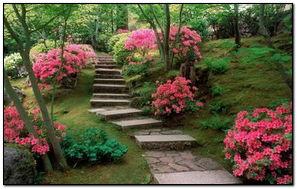 Thiên nhiên.Những bông hoa màu hồng