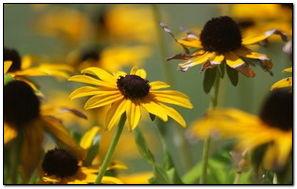 Летние желтые цветы