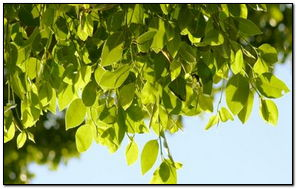 Зелений лист