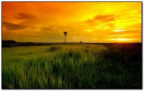 Красивый желтый закат