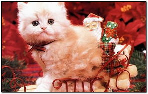 Christmas & Cats