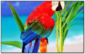 Tropikalna papuga