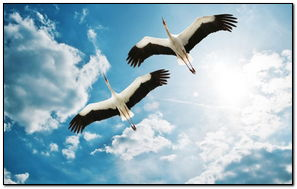 展开你的翅膀