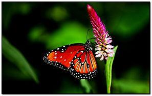 Con bướm