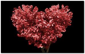 Red Tree Heart Shape