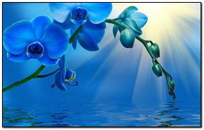 Hoa đẹp (1)