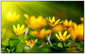 Florets
